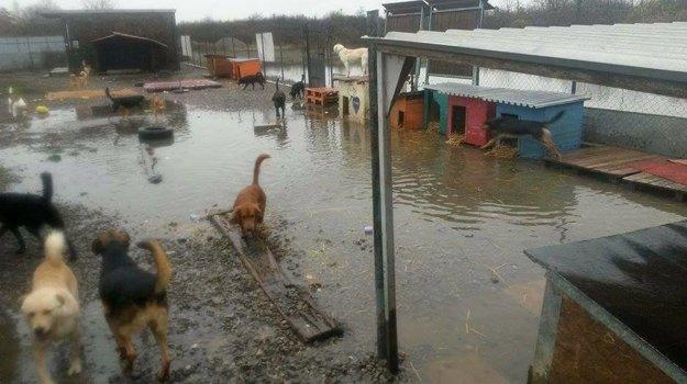 """Potopa v útulku. Výbeh sa na niekoľko dní premenil na """"plavecký bazén""""."""