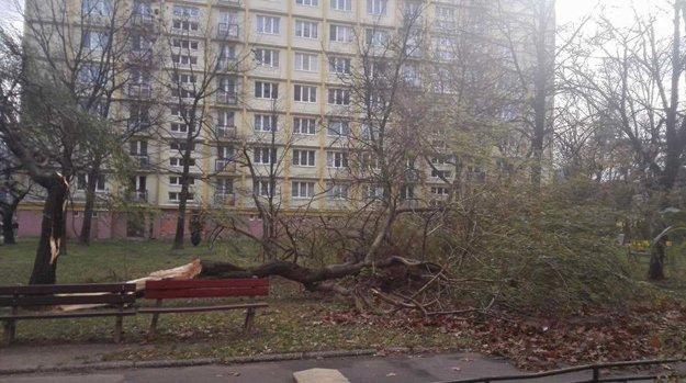 Vetrom zlomený strom medzi blokmi na Ul. Boženy Němcovej.