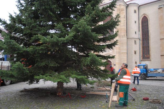 Podobné stromy umiestnia aj na Sekčove a na Šváboch.