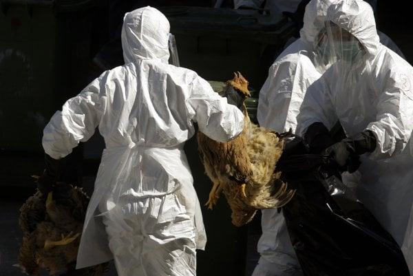 Vtáčou chrípkou sú najviac ohrození ľudia, ktorí likvidujú ňou nakazené chovy.