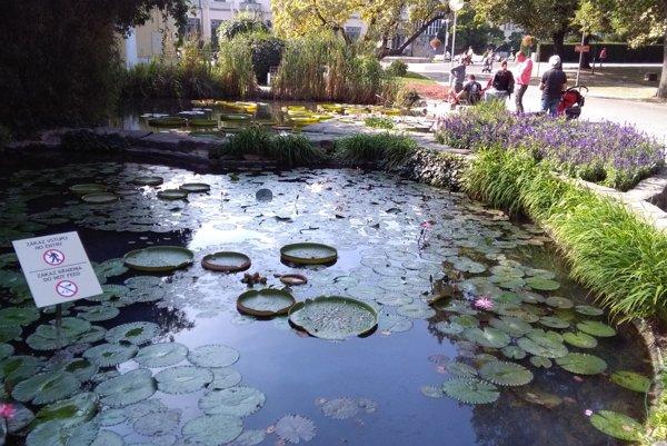 Okrasné jazierka na Kúpeľnom ostrove v Piešťanoch.