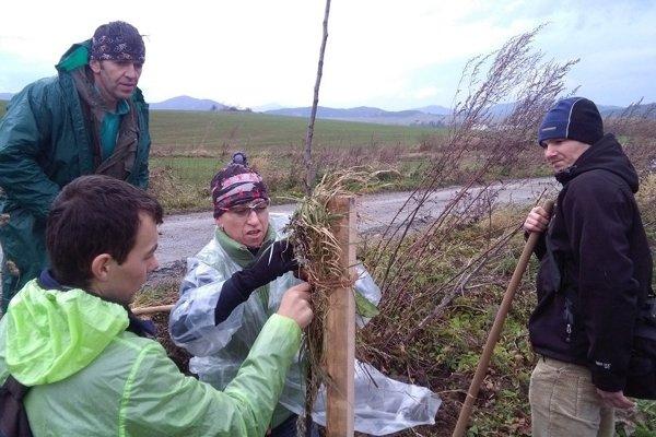 Vo veternom počasí vysadili dobrovoľníci šesťdesiat ovocných stromčekov.