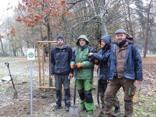 Arboristi z ISA Slovensko si vybrali Nitru za štvrté mesto, kde vysadia nový strom.