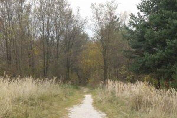V najbližšom čase mesto s úpravou chodníka cez lesík nepočíta.