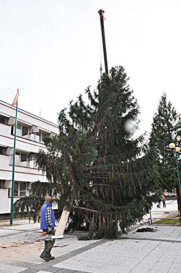Previezli ho pred mestský úrad, kde poslúži ako vianočný strom.