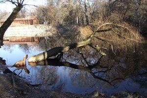 Strom zatiaľ zostane v jazere.