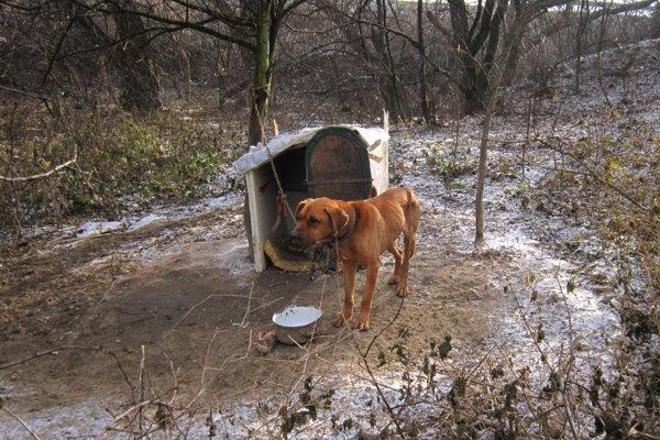 Mašličkovo. Na psov si veterinári posvietili, odobrali ich jedenásť.