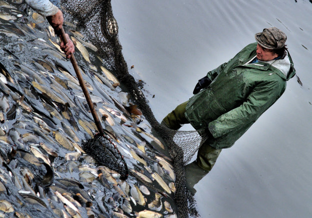Slováci sa raz ročne spamätajú a jedia ryby vo veľkom