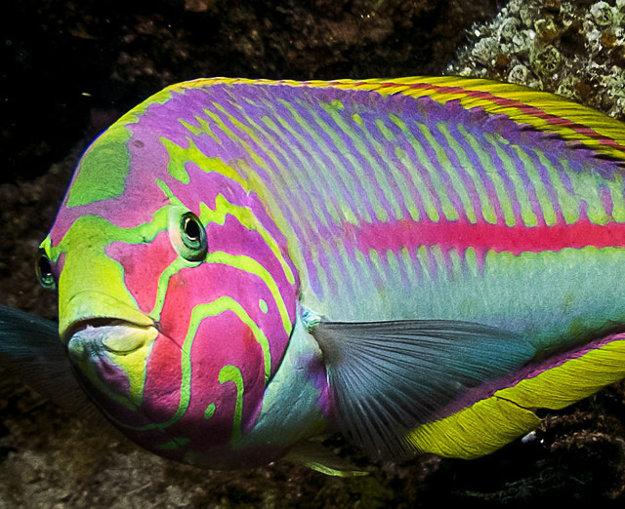 Rôzne exotické druhy rýb môžete vidieť v mori alebo v Grand Aquariu priamo v Hurghade.