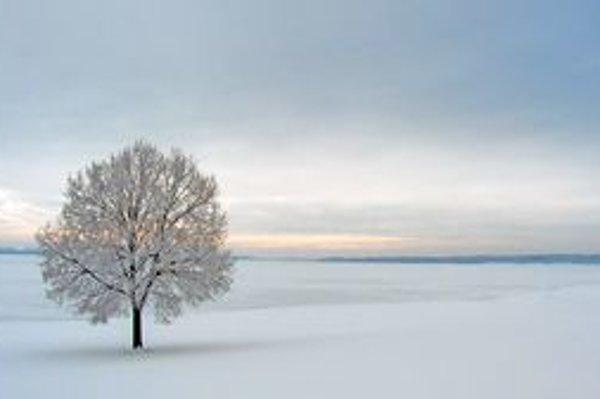 "<p>Ilustračné foto: <a href=""http://fotky.sme.sk/fotka/116067/osamoteny"">Soms/fotky.sme.sk</a></p>"
