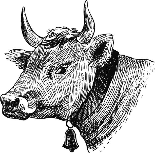 Hovädzie mäso pochádza z hoväda, nesmie však byť príliš staré.