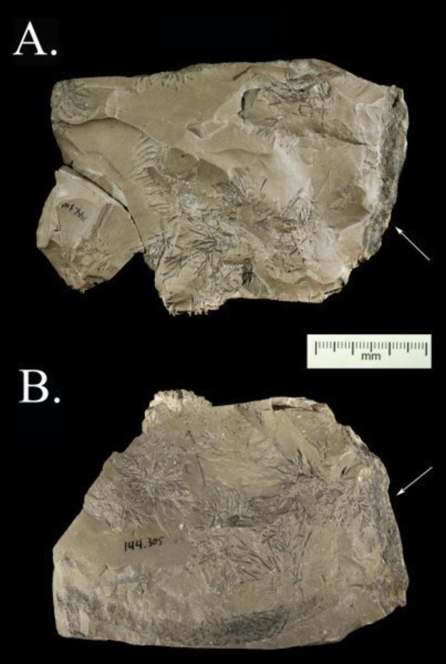 Kameň, ktorý sa páčil neandertálcovi.
