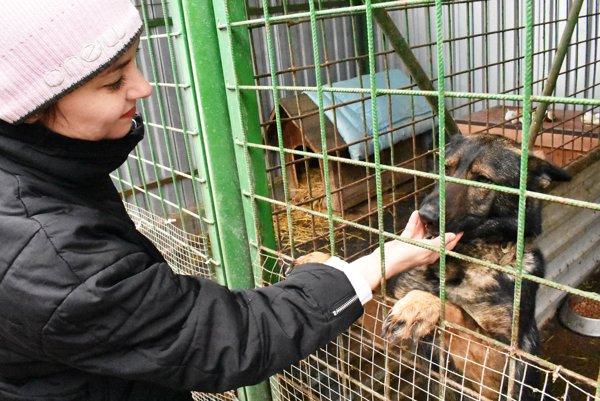 Pracovníčka vútulku Katarína Ruskovská sjedným zo psíkov, ktorí čakajú na nový domov.
