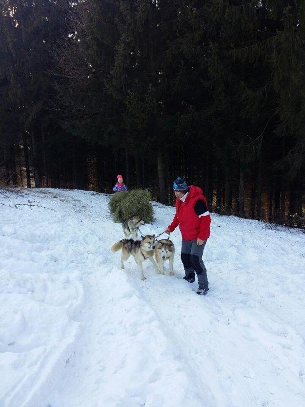 V týchto zimných dňoch pomáhajú aj poľovníkom.