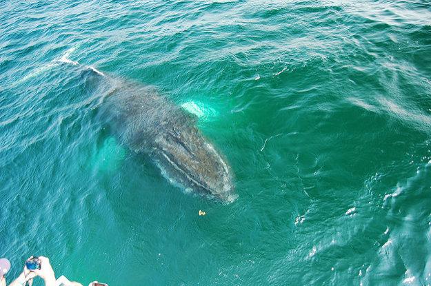 Samaná, Dominikánska republika: Vydajte sa za veľrybami alebo do dažďového pralesa.