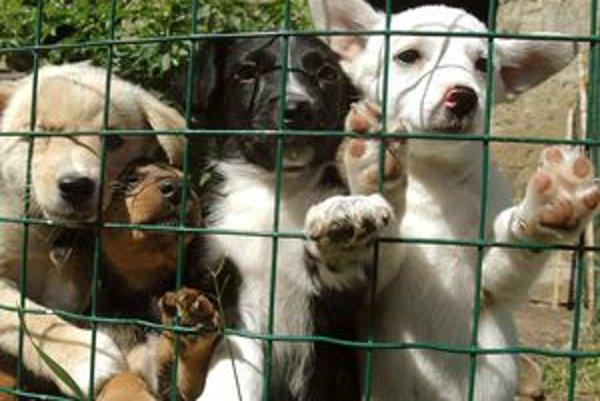 O niektoré psíky ľudia nejavia záujem.