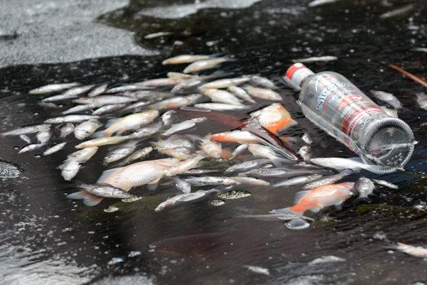 Mŕtve ryby v jazierku v Mestskom parku.