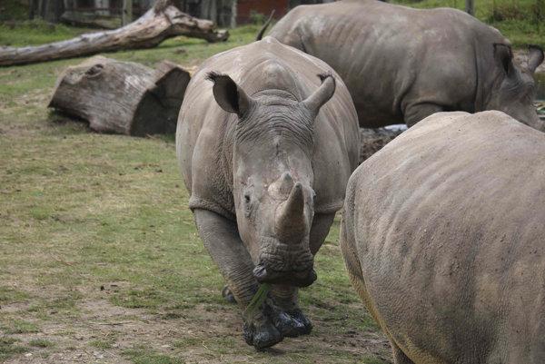 Zoo v Thoiry je preslávená svojím safari parkom.