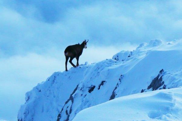 Život v oblakoch priblíži divokú prírodu Tatier.