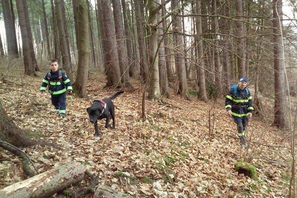 Psovodi z trstenského Dobrovoľného hasičského zboru tiež pátrajú po nezvestnom.
