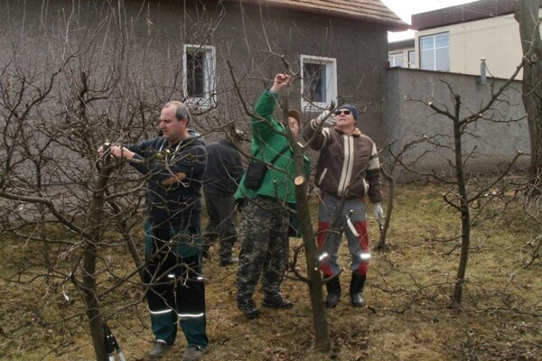 Záhradkári ukázali svoju šikovnosť pri reze stromov.