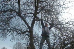 Súťaž v reze a strihaní ovocných stromov v Likavke 2017.