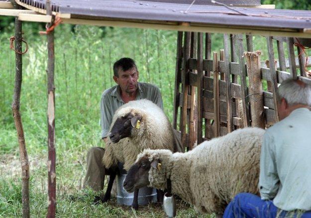 Salašníctvo má na Slovensku stáročnú tradíciu. FOTO - SME JÁN KROŠLÁK