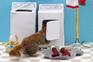Ak by ste chceli vedieť, tak aj veverice perú. Teda tie, ktoré fotí Nancy Rosová.