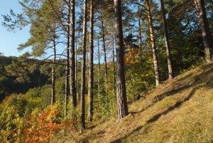 Podlavické výmole patri k zaujímavým lokalitám, ktoré si zaslúžia  ochranu.