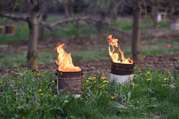 Niektorí ovocinári sa snažili ochrániť úrodu pomocou parafínových sviec.