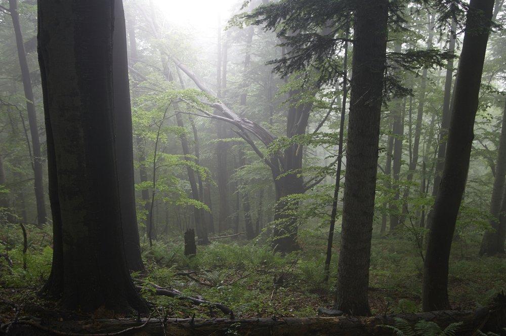 Vo Vlčej sú chránené prirodzené procesy, k životným cyklom stromov sa pristupuje s rešpektom. Nevytínajú sa ani padnuté či mŕtve stromy.
