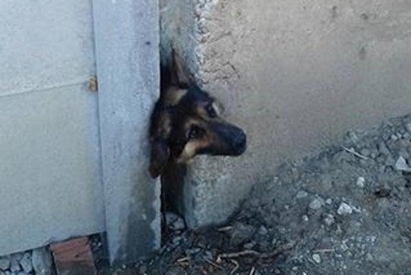 Vystrašený pes FOTO: Frederika Péčiová