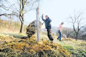 Starostlivosť o stromčeky si vyžaduje opatrné zaobchádzanie