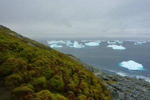Machové kolónie na pobreží Antarktídy.