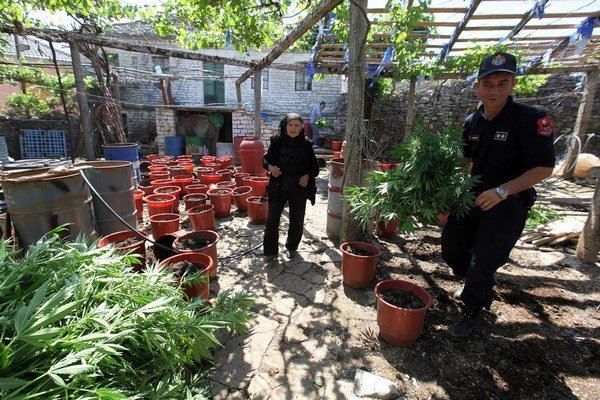 V Lazarate sa marihuana pestovala takmer všade.