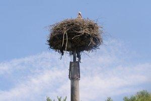 Bocianie hniezdo sa nachádza na elektrickom stĺpe.