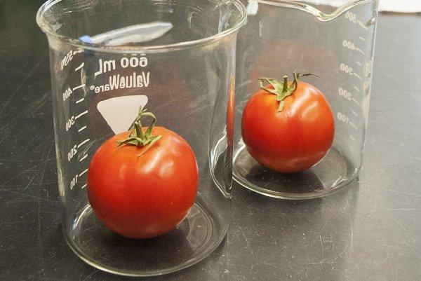 Výskum paradajok bude odteraz trochu ľahší.