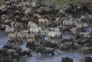 Pohľad na zver v tanzánskom národnom parku Serengeti.