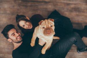 Okamžité pozitívne asociácie s partnerom môžu vyvolať aj obrázky psíkov.