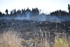 Zhorený les po požiari severne od obce Gemerská Poloma.