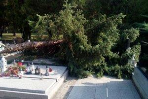Mohutný strom spadol na cintoríne v Brestovanoch.