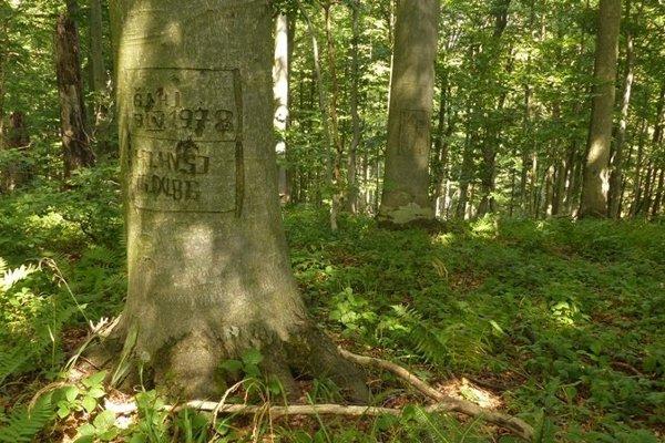 Les je starý, pravá divočina.