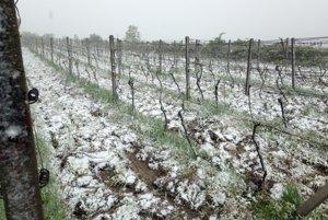 Jar vo vinohrade.