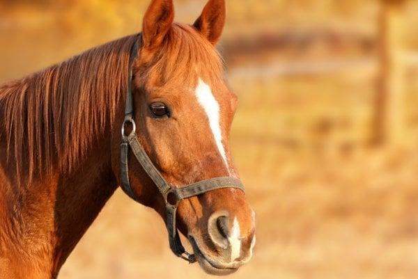 Kone žijú bok po boku človeka už tisícky rokov.