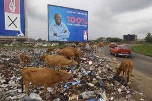 Podvyživený dobytok sa pasie na smetisku pred transparentom doterajšieho prezidenta Pobrežia Slonoviny Laurenta Gbagba.
