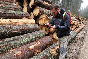 Ekológ Michal Wiezik ukazuje, že máloktoré vyťažené drevo bolo aj napadnuté lykožrútom.