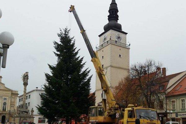 Vianočný stromček je tohto roku z Leopoldova.
