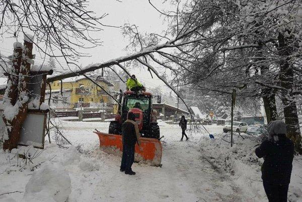 Strom nevydržal nápor mokrého a ťažkého snehu.