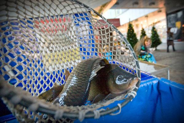 Najlepšie je nechať si rybu usmrtiť a vyčistiť u predajcu. Urobia to humánne a odborne.