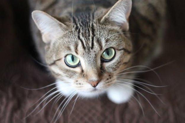 Mokré mačička pozeraním